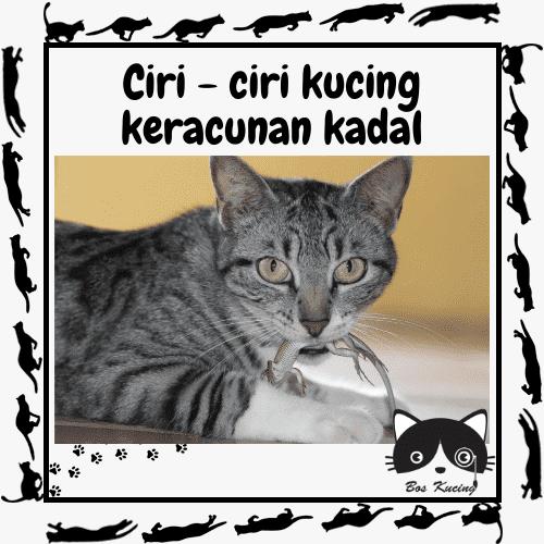 kucing keracunan kadal